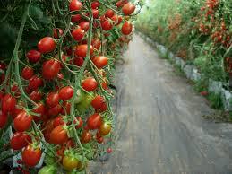 native plant nurseries perth forum fruit trees in perth wa