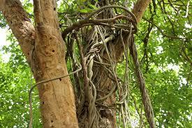 cutting the vine allworship