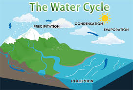 fun water cycle facts for kids