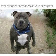 Stoned Dogs Meme - strayastoner
