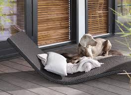 Dog Blinds 3 Tips To Prevent Décor From Going To The Dogs Decorview