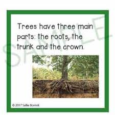 trees facts cards sallieborrink