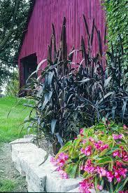 plants for a winter cutting garden tall ornamental grasses