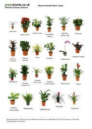 best plant for desk simple 20 office desk plants design decoration of best desk plants
