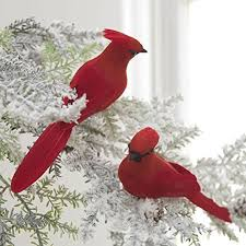 156 best birds birds and more birds images on