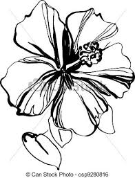 clip art vector of hibiscus black and white sketch drawing a