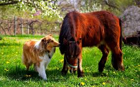 dogs friends field backyard pony dog friend pictures quotes hd 16