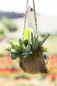 137 best succulents images on pinterest gardening plants and