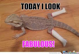 Lizard Meme - fabulous lizard by xxsaitanxx meme center