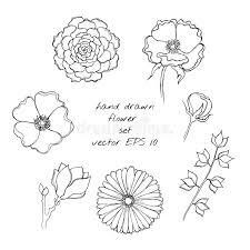 hand drawn ink flower sketch set gerbera succulent dog rose
