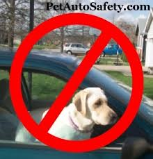Window Seats For Dogs - dog car seat belt pet auto safety