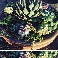 Old Fire Pit - my old fire pit repurposed into a succulent arrangement loooove
