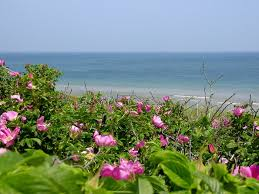 Blue Water On The Ocean Cape Cod - 508 best old cape cod summer vacation images on pinterest