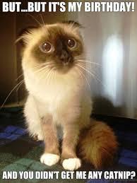 Depressed Cat Meme - 110 lovely cat memes
