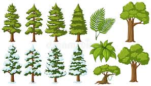 different types of trees different types of trees stock vector illustration of image 95826133