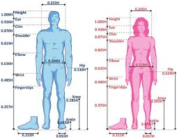 Male And Female Anatomy Standard Properties Of The Male And Female Bodies Figure 2 Of 12