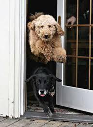 Exterior Pet Door Bow Wow Barrier Retractable Exterior Door Barrier Great To Use