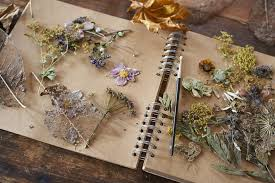 dried flowers how to press and your flowers