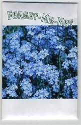 forget me not seed packets set of 7 mini forget me not seed packets flowering