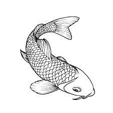 fish drawings on clipart library koi fish and koi fish drawing