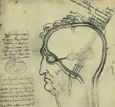 anatomy of norbiton anatomical