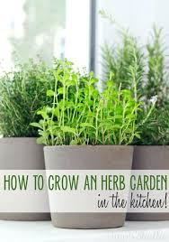 herbs indoors starting herb garden growing herbs indoors starting a herb garden