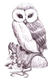 owl roses and skull tattoos sketch photos pictures and sketches