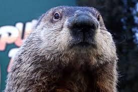 groundhog day punxsutawney phil ppp poll