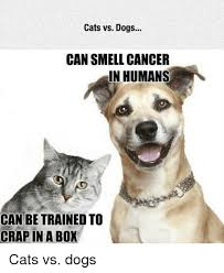 Funny Cat And Dog Memes - 25 best memes about cat vs dogs cat vs dogs memes