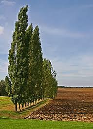 tag tree row openstreetmap wiki