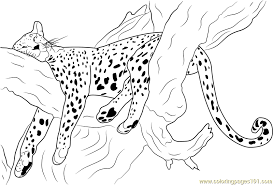 printable cheetah coloring pages coloring