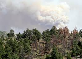 Wildfires In Colorado by 5 Ways Wildfires Threaten Western Wildlife The National Wildlife