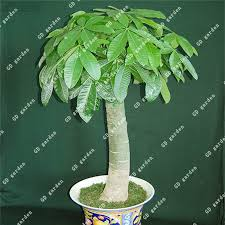 Gift Tree Free Shipping Gift Tree Green Promotion Shop For Promotional Gift Tree Green On