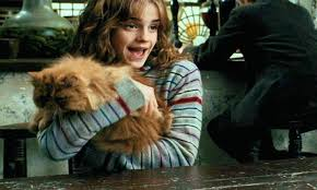 harry potter hermione don t believe the new harry potter theory about hermione s cat