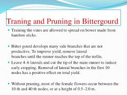 The Trellis And The Vine Training Pruning And Ratooning In Veg Crops