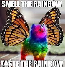 Unicorn Rainbow Meme - rainbow unicorn butterfly kitten memes imgflip