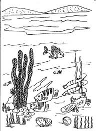 coral coloring pages for free