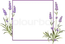 bunch of lavender flowers on a white background marriage