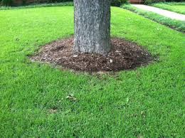 edging for around trees trees and plants circular edging for trees