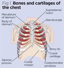Anatomy And Physiology Of Copd Anatomy And Physiology Of Ageing 2 The Respiratory System