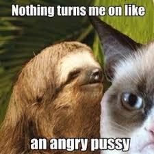 Sloth Fitness Meme - 75 best sloth memes images on pinterest ha ha sloth memes and