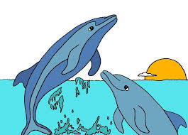 dolphin paint by number dolphin facts and information