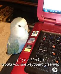 Parrot Meme - upvote in 30 seconds and the employment parrot will make all your