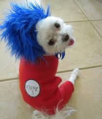 Dogs Halloween Costumes Pictures Red Blue Troll Halloween Costumes Dogs