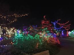 christmas lights at the zoo indianapolis the zoo s beauty queen picture of indianapolis zoo indianapolis