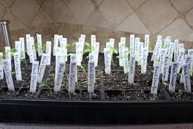 seed starting austin urban gardens