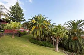 airbnb morocco check out this stunning family villa in tenerife for just 60