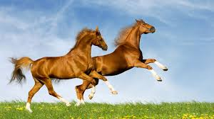 ferrari horse vs mustang horse wild horse wallpapers pictures images