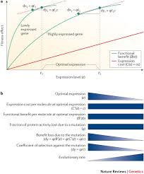 determinants of the rate of protein sequence evolution nature