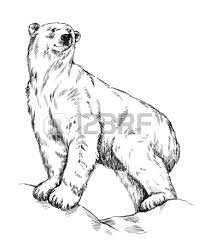 965 polar bear head stock illustrations cliparts and royalty free
